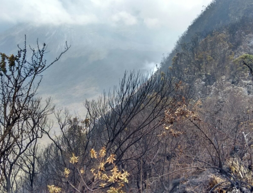 Volunteers, rangers contain Mount Meru fires