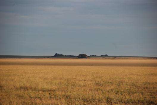 Serengeti-Slider-box