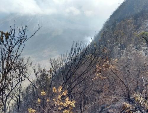 Volunteers, rangers contain Mount Meru fires