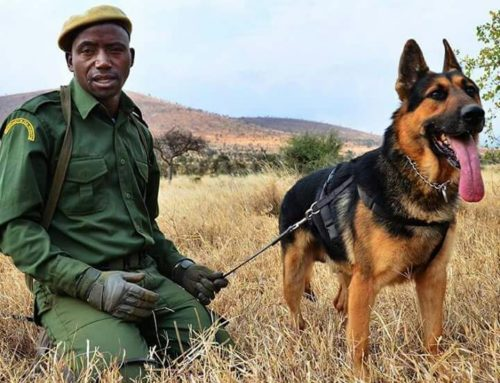 Anti-Poaching Commander Lembris' Childrens' Education Fund